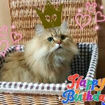 愛猫リオちゃんの日♥の記事に添付されている画像