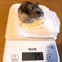 体重測定の記事に添付されている画像