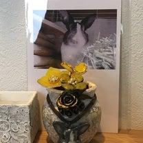 3回目の菜の花の季節の記事に添付されている画像