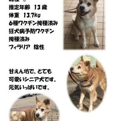 【拡散希望】千葉市センター収容中の犬、家族募集中の記事に添付されている画像
