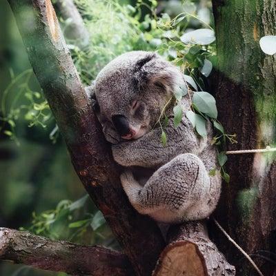 【最高優先】睡眠の優先度についての記事に添付されている画像
