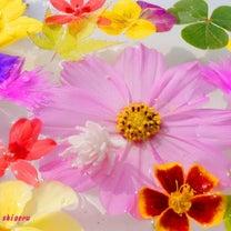 お花いっぱいの記事に添付されている画像
