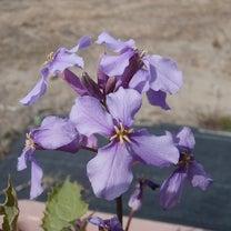 暖かい日 ~ 花 と やぎ ~の記事に添付されている画像