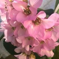 晴れて春爛漫の記事に添付されている画像