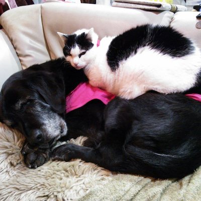 動物かっさ養生講座について☆の記事に添付されている画像