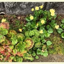 『春野菜』#1の記事に添付されている画像