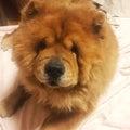 #飼い犬の画像