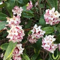 春の花いろいろ!の記事に添付されている画像