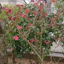 色々なお花の記事に添付されている画像