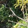 桜の季節に運命の一着と出会っての画像