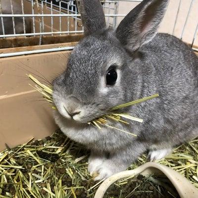 ウサギのケージ掃除と産んじゃうかもアピールの記事に添付されている画像