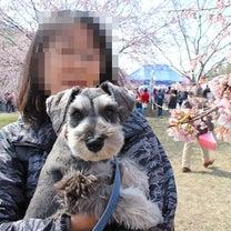 桜んぽ ② 北浅羽桜堤の記事に添付されている画像
