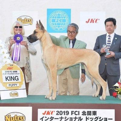 FCI北関東インターナショナルドッグショーの記事に添付されている画像