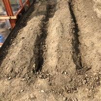 ビーツ 二十日大根 小松菜 種まきの記事に添付されている画像