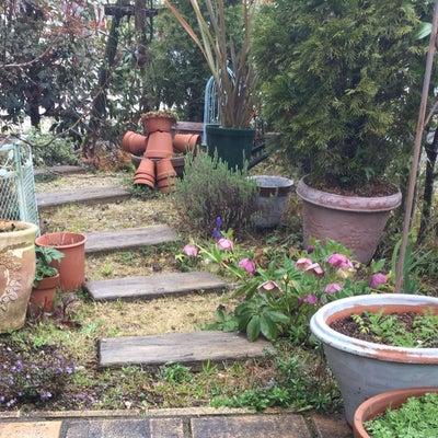 春の庭  雨上がり╰(*´︶`*)╯♡の記事に添付されている画像