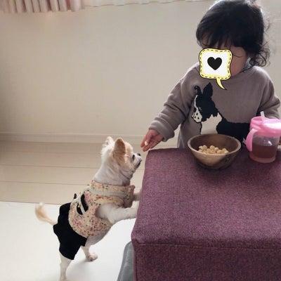 *2歳2ヶ月の色々*の記事に添付されている画像