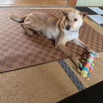 福岡県築上郡築上町で迷子MIX犬保護の記事に添付されている画像