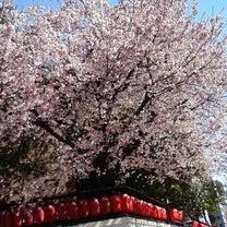 桜と収録とてんやの日の記事に添付されている画像