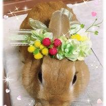 とっちゃんママの花冠の記事に添付されている画像