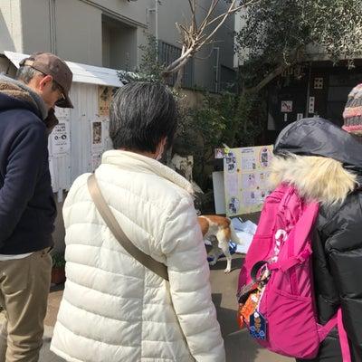 3.16 水戸にてミニ里親会 2頭トライアル開始の記事に添付されている画像