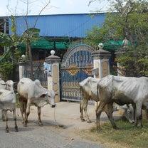 カンボジアの中にインドの記事に添付されている画像