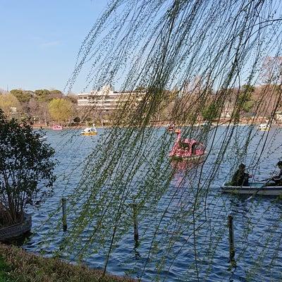 さくらサクラ桜の記事に添付されている画像