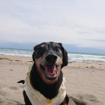 海きゃぴきゃぴ楽しいぃ~(*≧∀≦*)の記事に添付されている画像