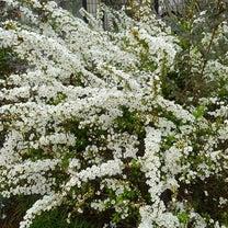お花、色々の記事に添付されている画像