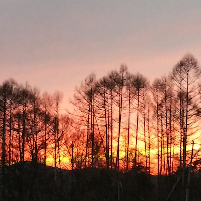 原村の夕日と花と〜なぜかウルトラマンの記事に添付されている画像