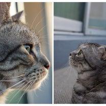 猫の講習会の記事に添付されている画像