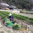 野菜の出荷と畑しごとの記事より