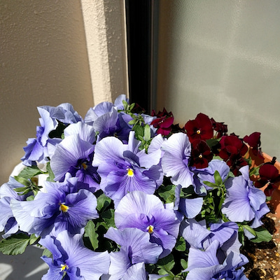 花盛りのベランダの記事に添付されている画像