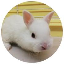 【門真店】小動物入荷情報&小動物ルーム日記の記事に添付されている画像