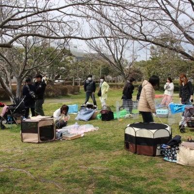 うさんぽ会2019春の記事に添付されている画像