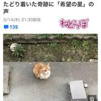 SNSでの呼びかけで、半年ぶりに見つかったネコちゃん。の記事に添付されている画像