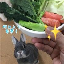 ウサギの生活の記事に添付されている画像