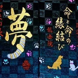 画像 【福井】猫寺 「御誕生寺」でいただいたステキな新作【御朱印帳】&【限定御朱印】~追加掲載 の記事より 34つ目