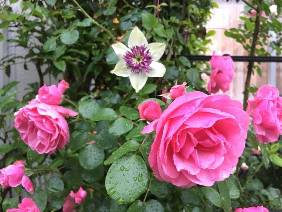 本日のブログは【 春爛漫を夢見て!バラの園を夢見て!】です。