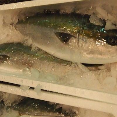 【ハマチ、ヒラマサ縦釣り】3月19日の水揚げ結果の記事に添付されている画像