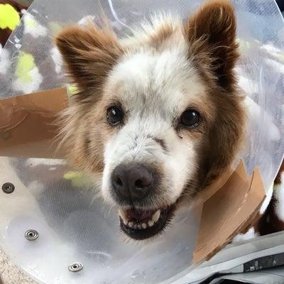 下半身不随の噛み犬ラッキーの旅立ちの記事に添付されている画像