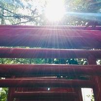 【川口】鎮守氷川神社③末社稲荷神社の鳥居に降り注ぐ光の記事に添付されている画像