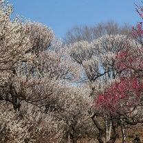 梅のお花見とぴったりなお花モチーフの記事に添付されている画像