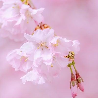 春分までにしっかり決意をするためには・・・の記事に添付されている画像