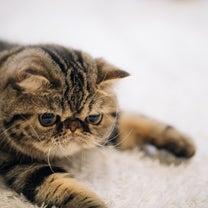 肥満だと寿命が縮まる?猫ちゃんの肥満が引き起こす病気についての記事に添付されている画像