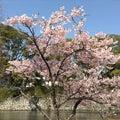 #松原神社の画像