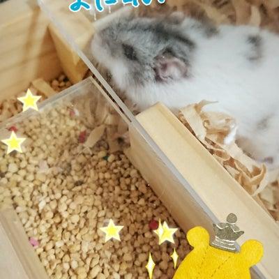 可愛いおばけ歓迎♡の記事に添付されている画像