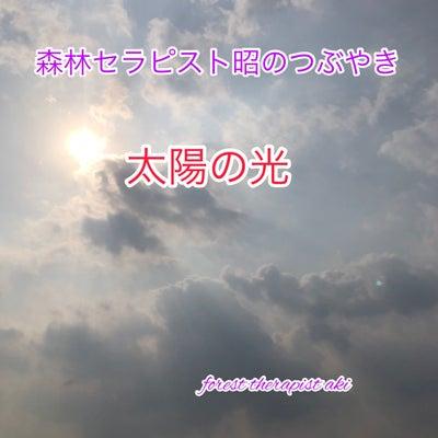 太陽の光の記事に添付されている画像