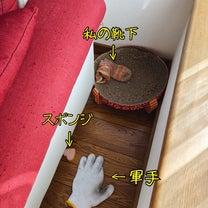 隠す猫と、散らかす犬。の記事に添付されている画像