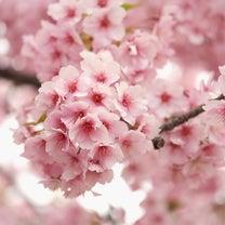 春ですね〜な今日のブログ♪の記事に添付されている画像