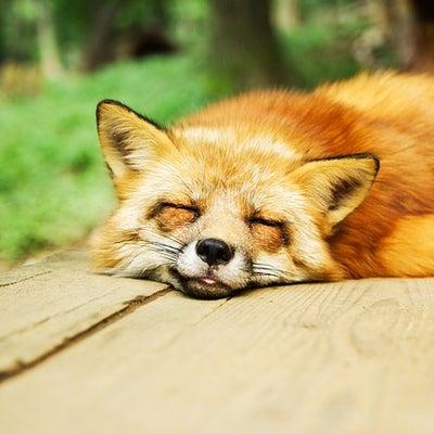 日頃の疲れを癒すエネルギーワーク『ふぅ~!リラックス』のご案内です。の記事に添付されている画像